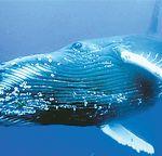 Бразилия приглашает любителей наблюдать за китами
